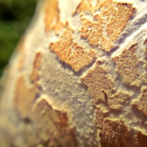 Mushroom through a macro lens
