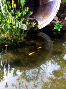 koi pond reflection
