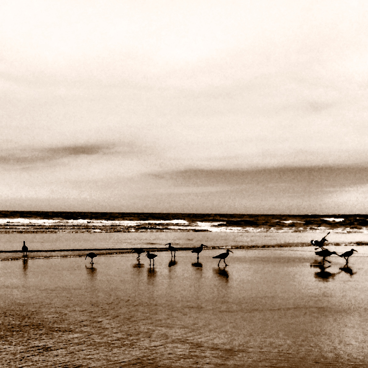 sandpipers in sepia