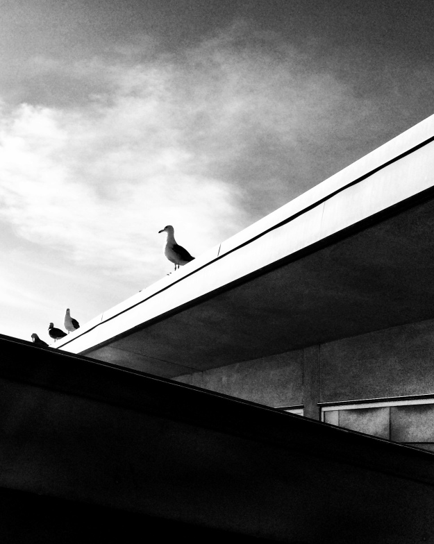 Gull on roof