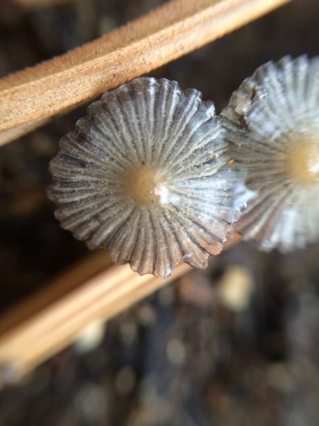 mushrooms up close