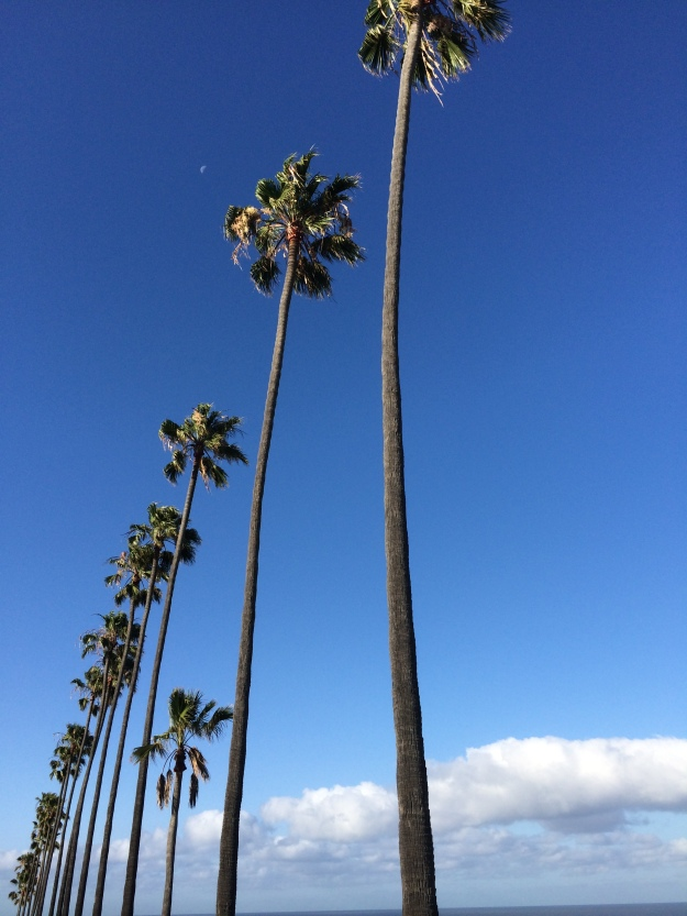 palms higher than the clouds