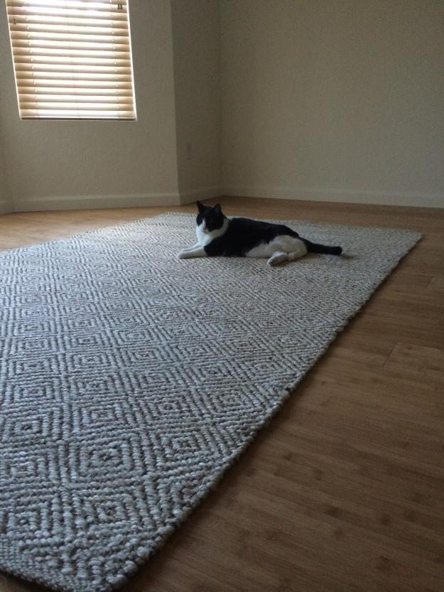 Phil on carpet