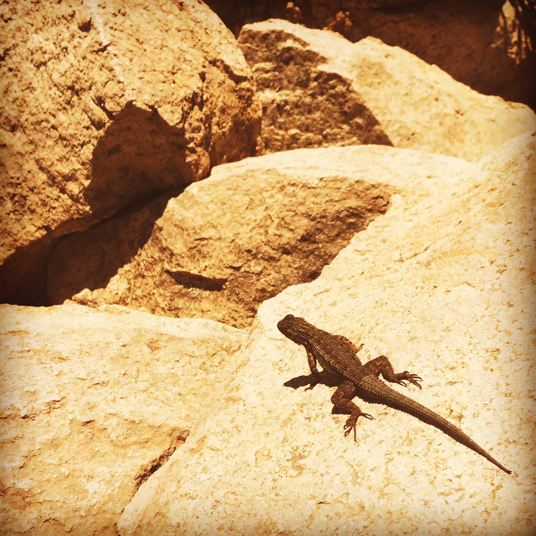 Lizard_wabi sabi