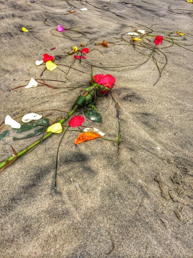 rose on the beach