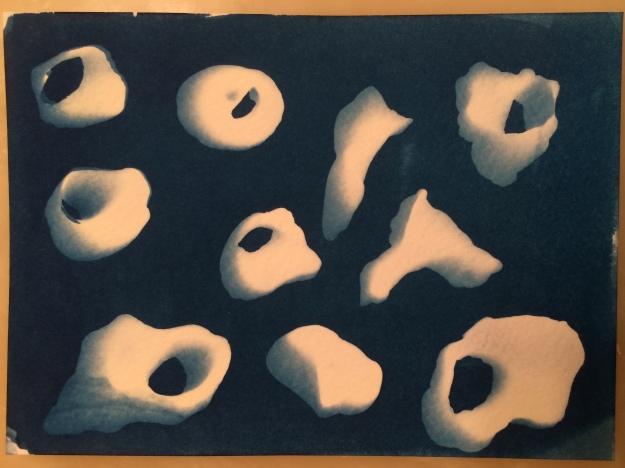 shell cyanotype