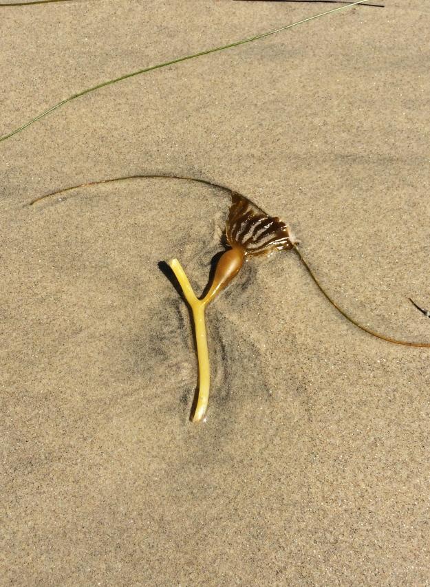 Y seaweed