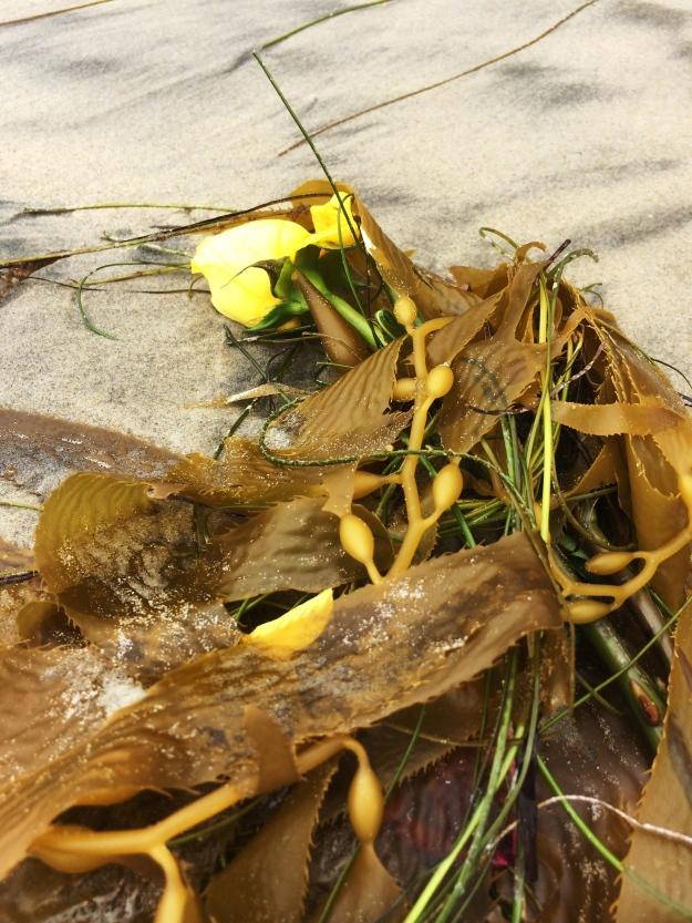 yellow roses in the kelp