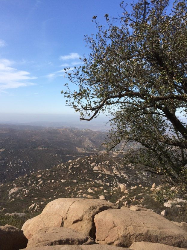 Tree Mt Woodson