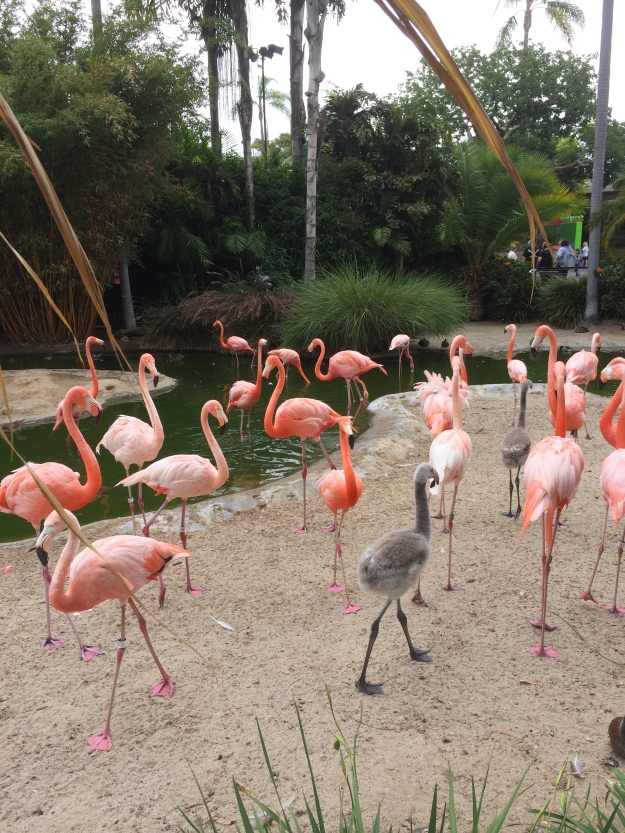 unexpected-flamingo