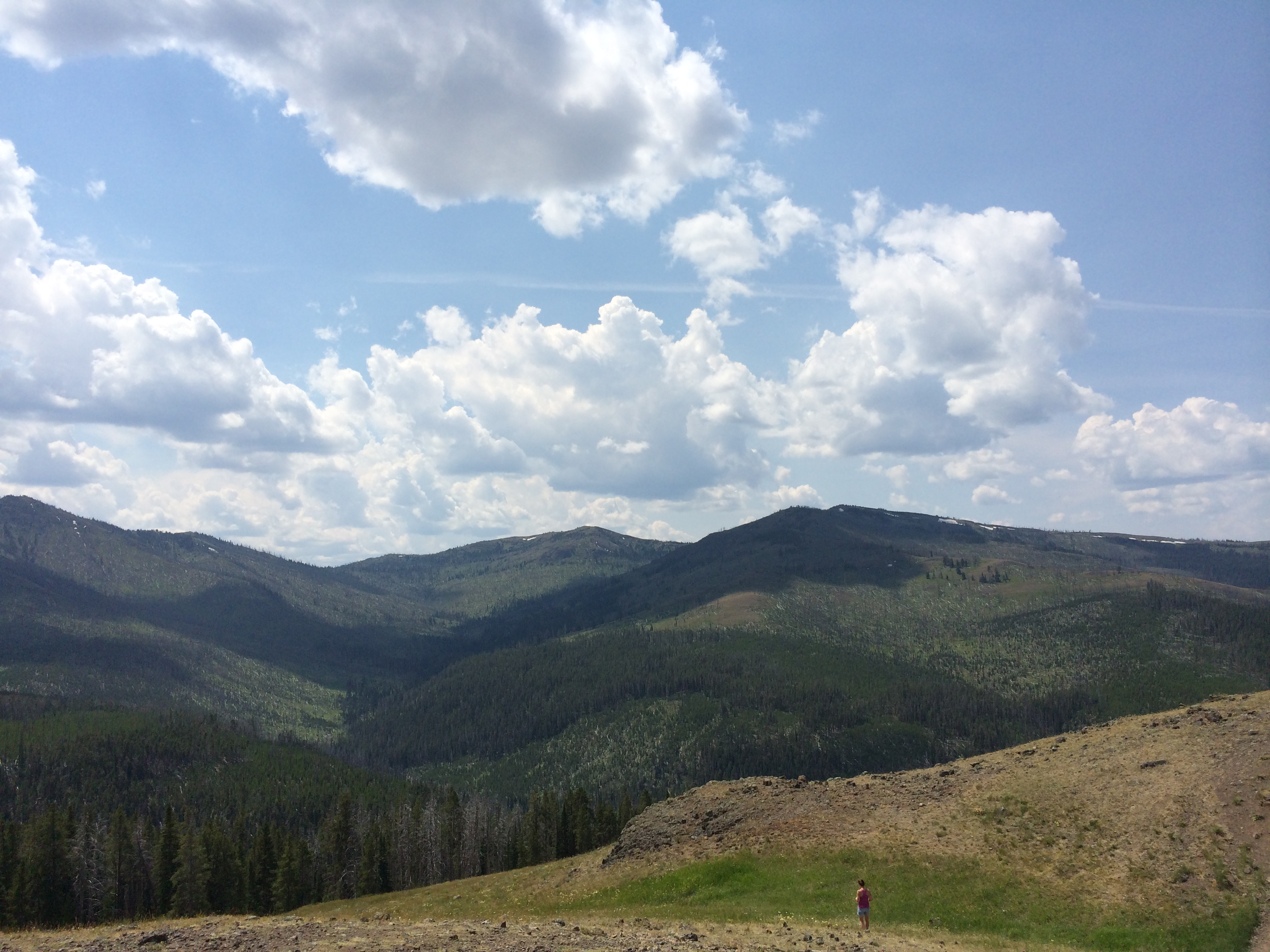 high altitude meadow