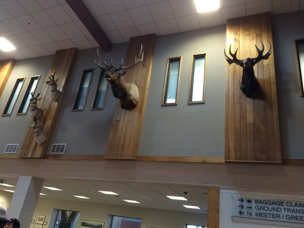 missoula airport taxidermy