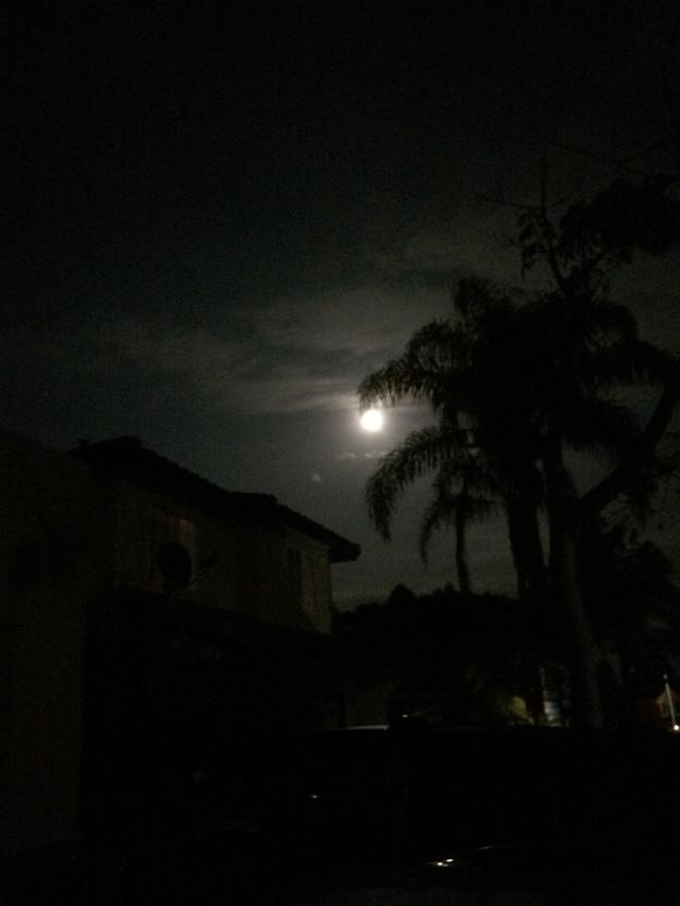 Moon through palms