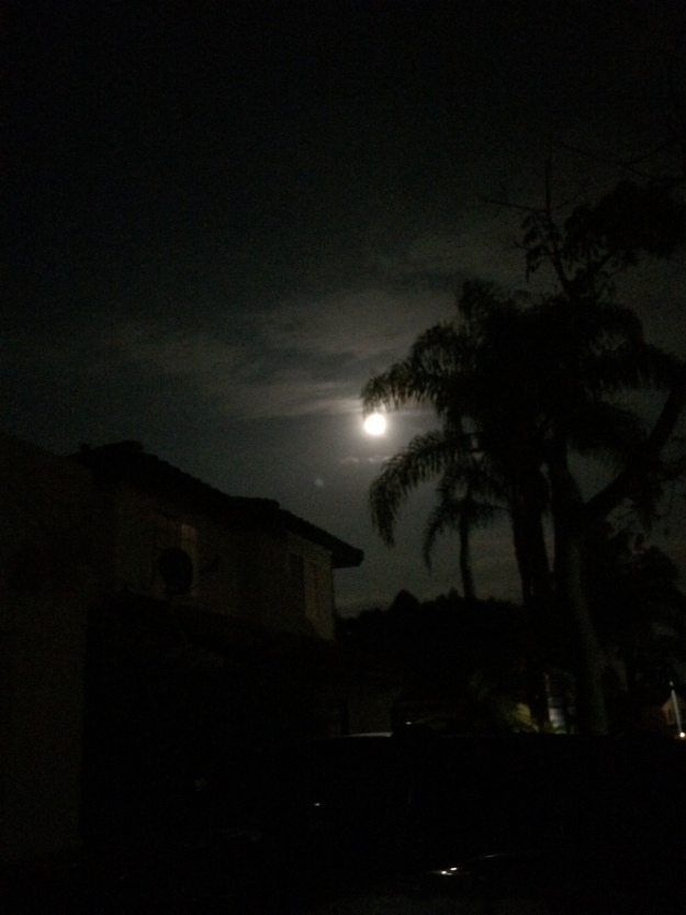Moon through palms