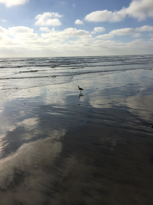 sandpiper reflected clouds