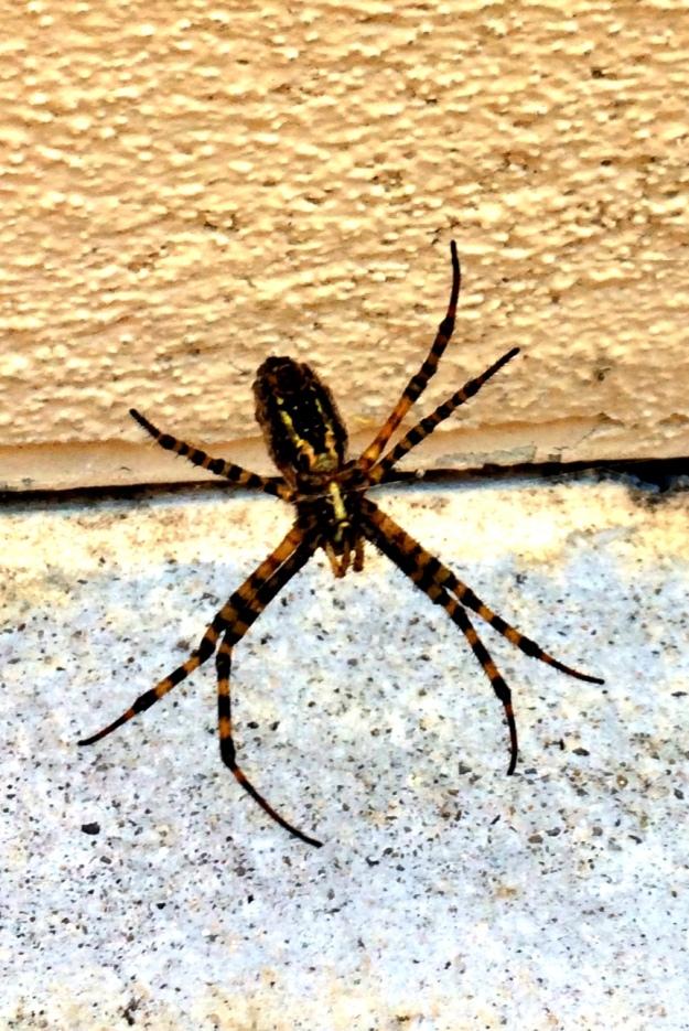 school spider