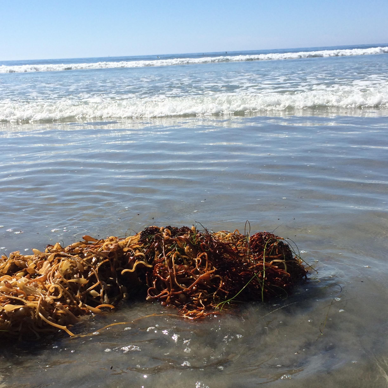 orange and red kelp