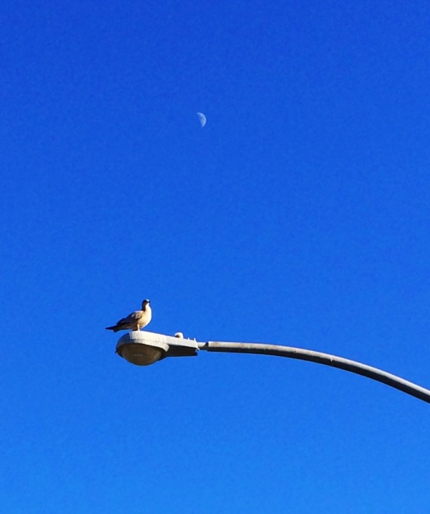 seagull and moon