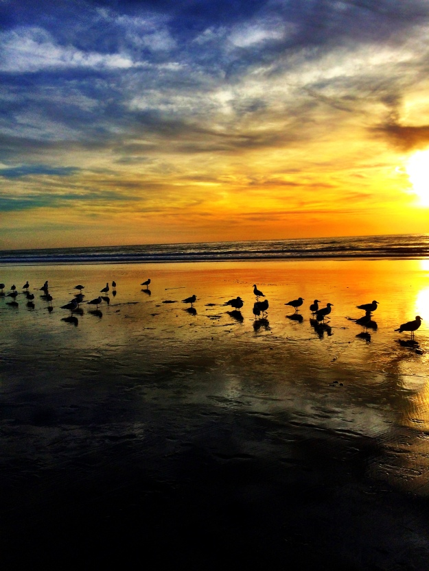 seagulls and colorful sky