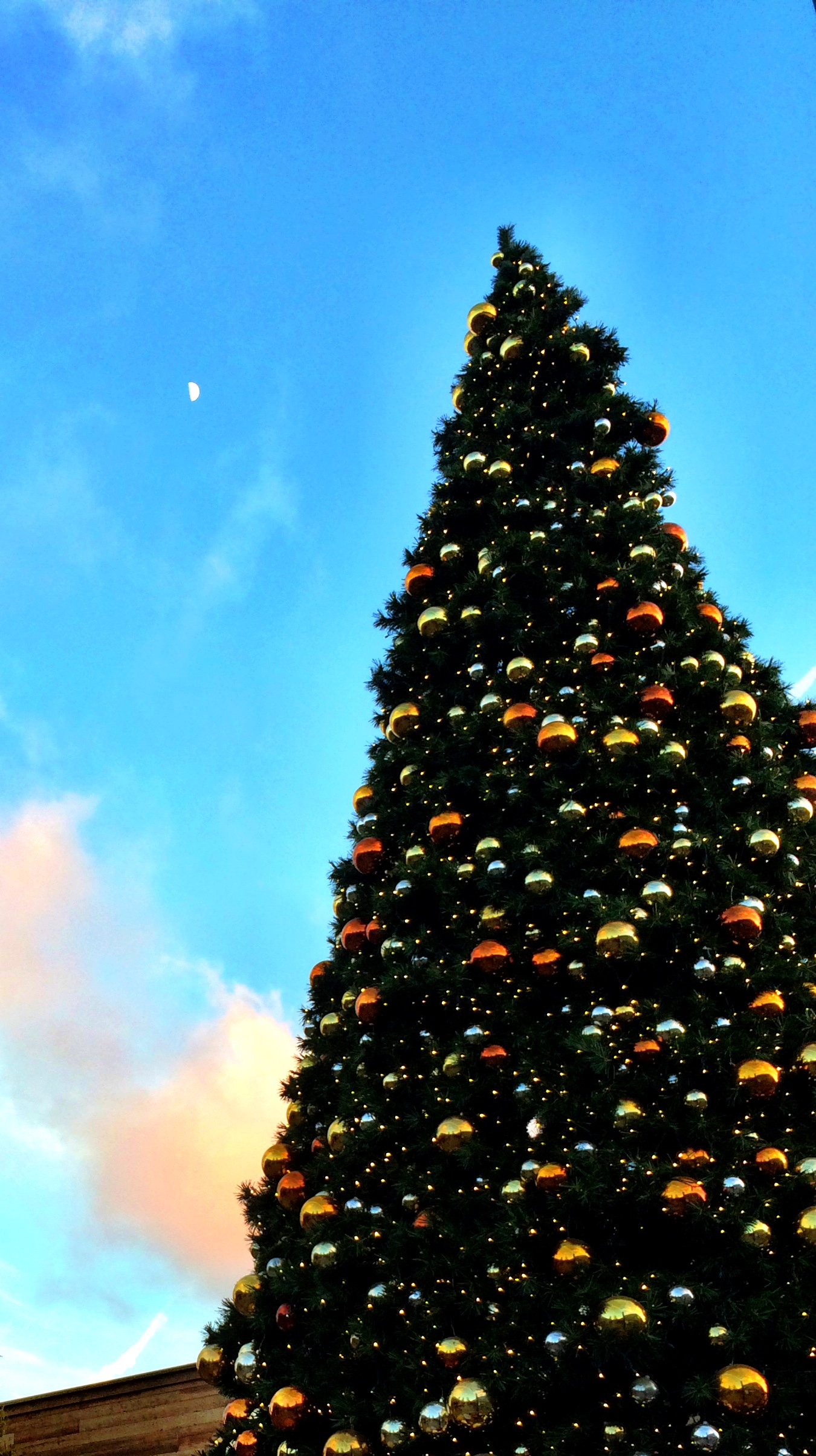 Christmas tree and moon
