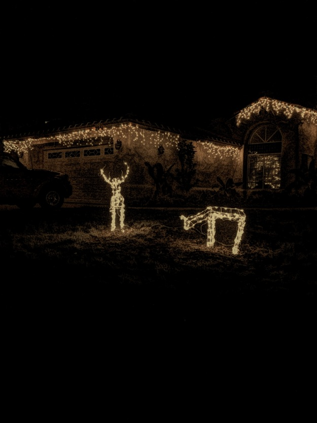 deer in lights