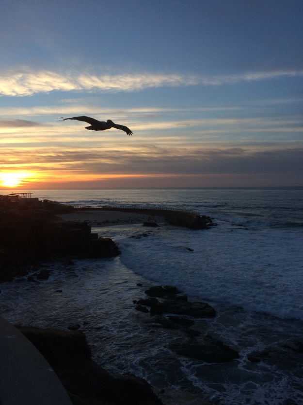 pelican and sunset