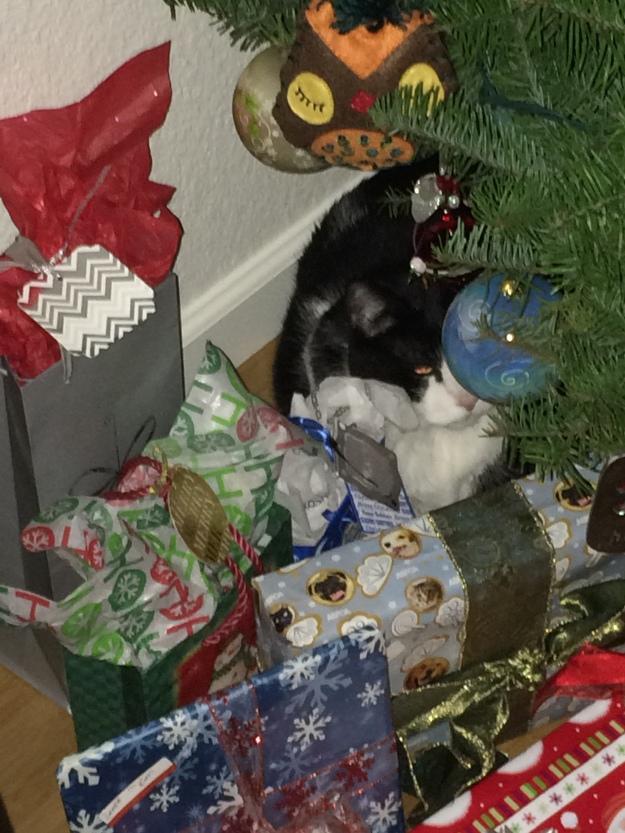 Phil under the tree