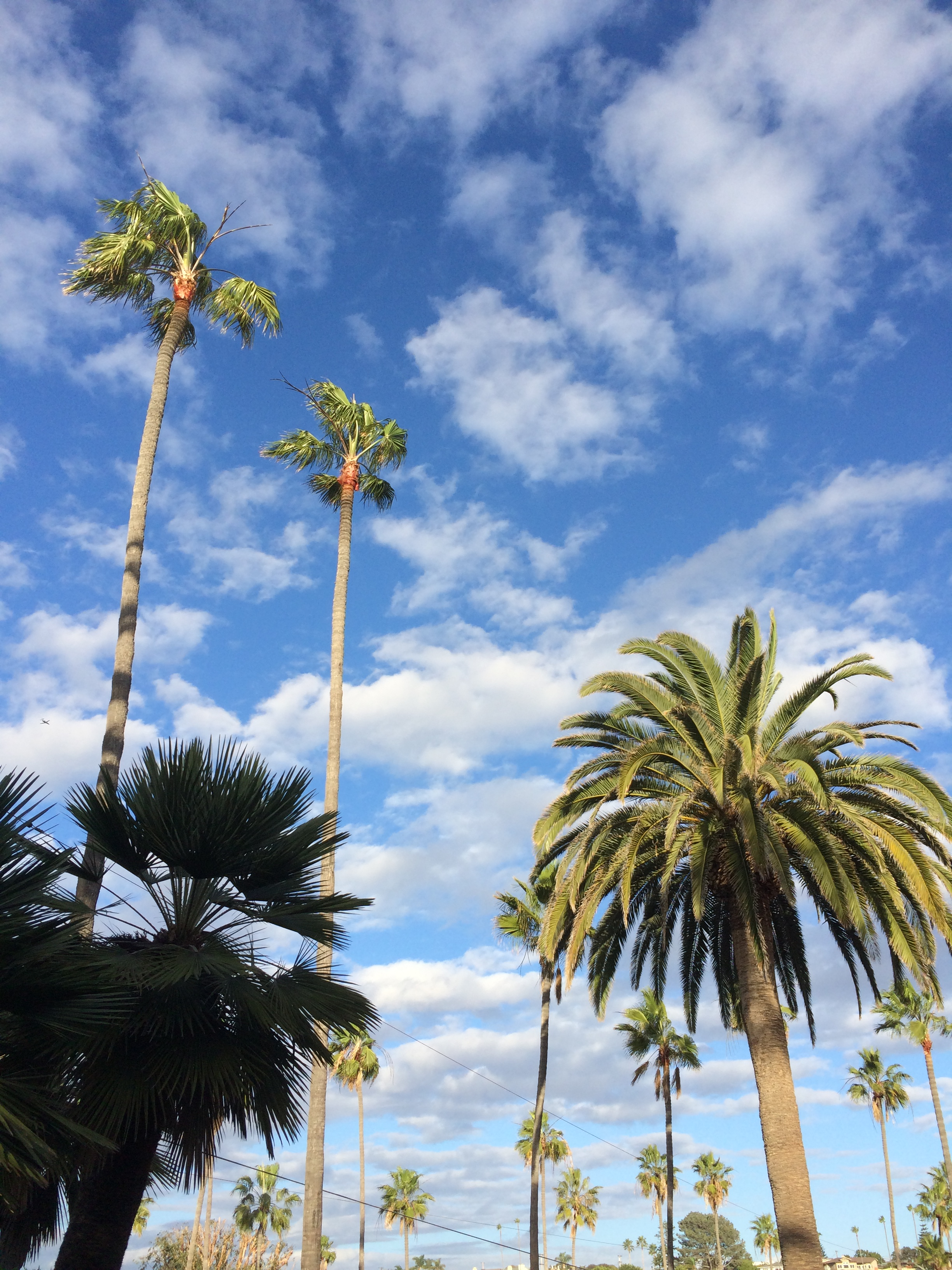 puffy clouds and palms