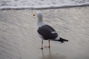 gull looking out