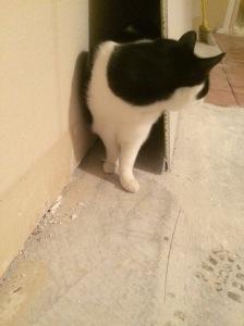 Jack exploring