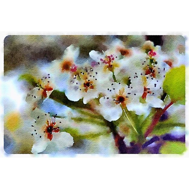 reach-blossoms