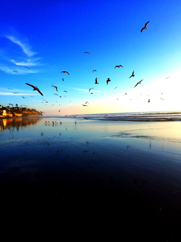 reach-seagulls