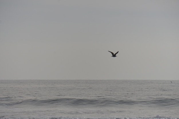 seagull on a gray day