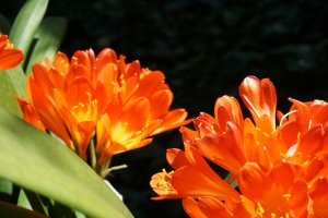 orange flowers in the  light