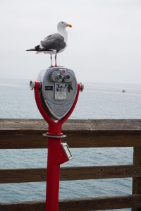 gull on the viewer