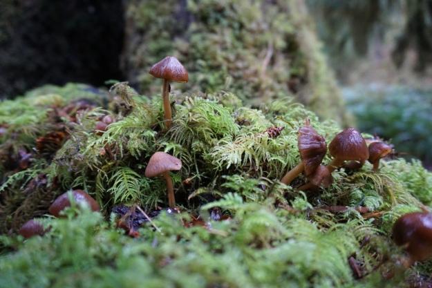 mushroom fairyland