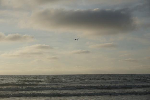 pelican-in-the-sky