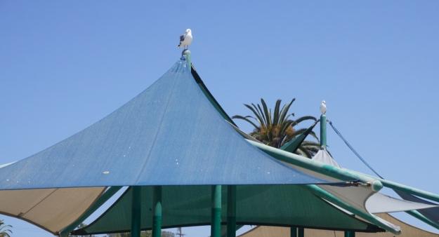 seagulls on a perch
