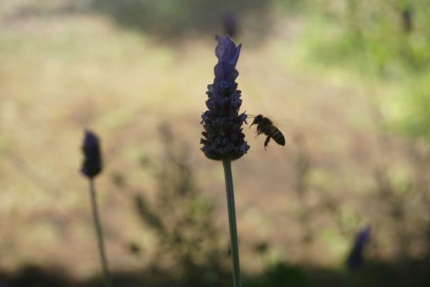 lavenderandbee bo18