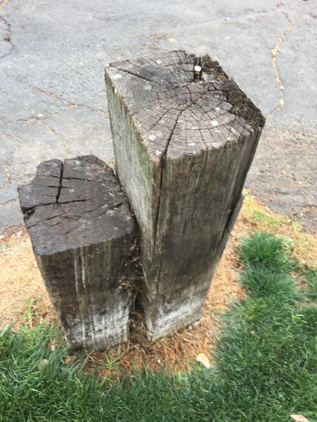 Alyson stump