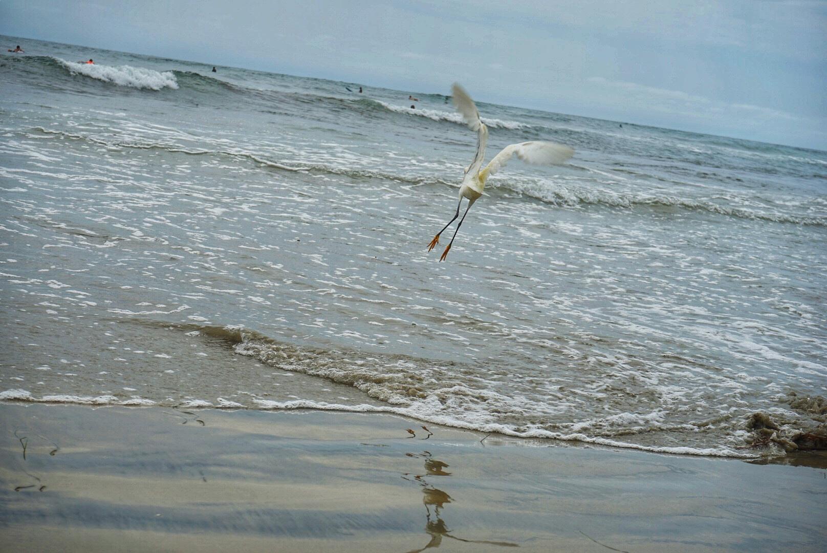 yellow feet in flight