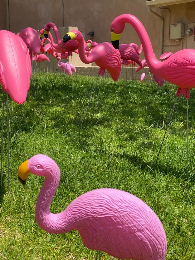flamingosJPG